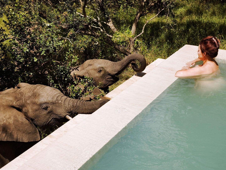 royal-malewane-kruger-national-park-south-africa